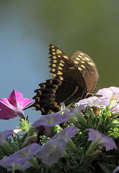 Butterfly Pretty by Dottie Dees
