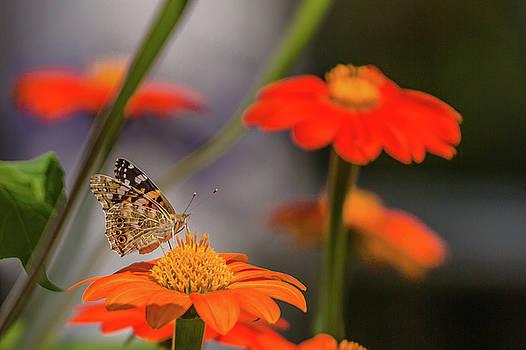 ReDi Fotografie - Butterfly