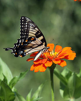 Butterfly by Richard McRee