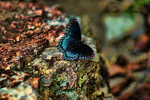 Butterfly Rock by Rick Friedle