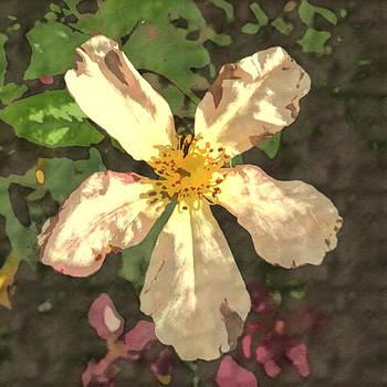 Butterfly Rose by Amy Jo Garner
