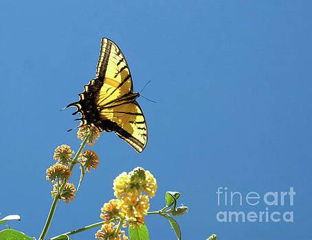 Butterfly Sante Fe by Mary Kobet