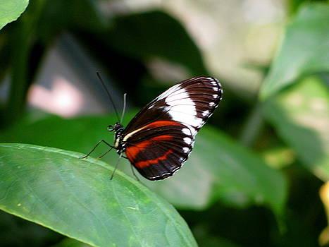 Sherri Williams - Butterfly
