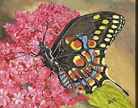 Butterfly by Sue Ervin