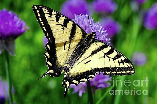 Butterfly Time by Sandra Updyke