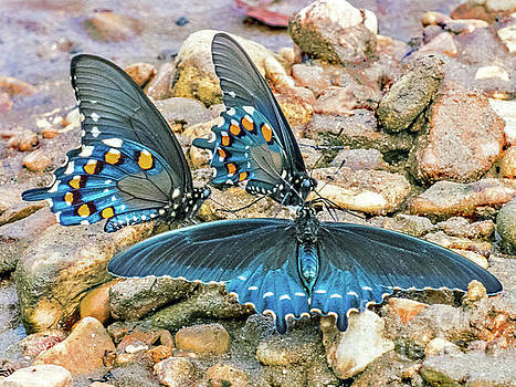 Butterfly Trio by Dragonfleyes Photography and Creations