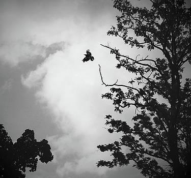Butterfly by Vail Joy
