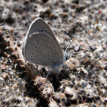 Stuart Turnbull - Butterfly walking