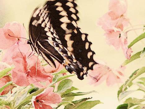 Butterfly Wallpaper by Dottie Dees