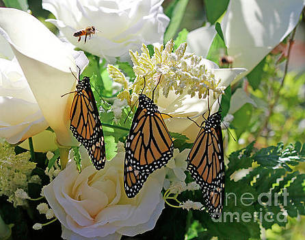 Butterfly Wedding Flowers Photo by Luana K Perez