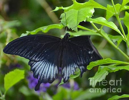 Butterfly Wings 2 by Stephanie  Bland