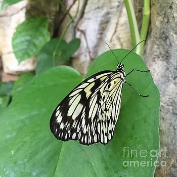 Butterfly Wings by Barbara Plattenburg