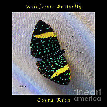 Felipe Adan Lerma - Butterfly Wings on Wings Macro Square Poster