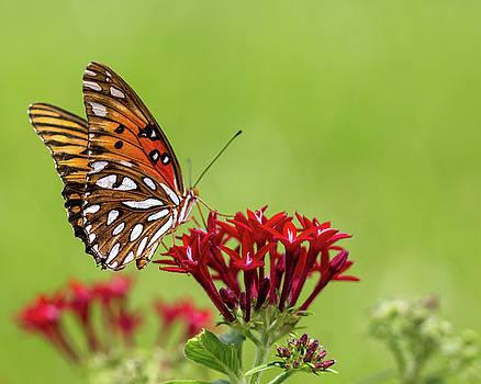 Butterfly Wings by Terri Tiffany
