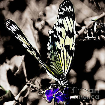 Butterfly with Blue Flower by Julie McCullough