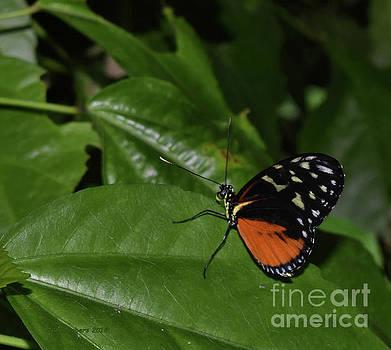 Butterfly World by Nancy Chambers