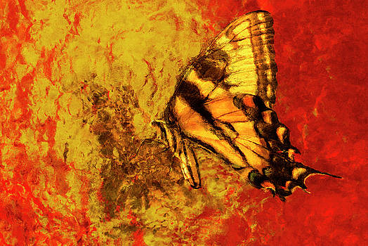 Butterfly Yellow Orange Red by Jack Zulli