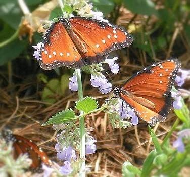 Butterflys by Leeann Stumpf