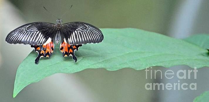 Butterfy Watch by Stephanie  Bland