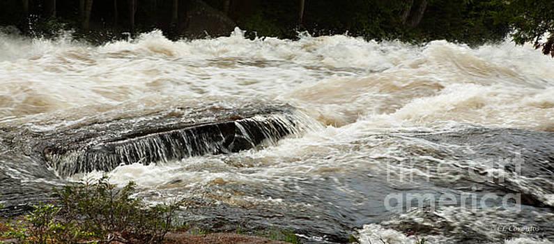 Buttermilk Falls Froth by Carol Lynn Coronios