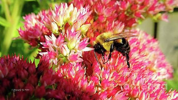 Buzy Bee by Ms Judi