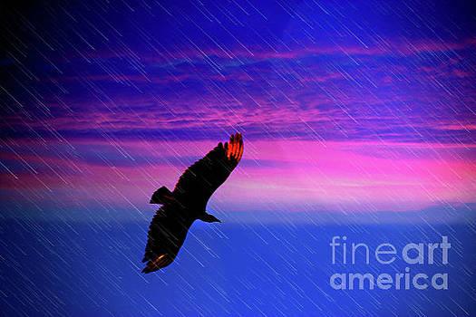 Buzzard In The Rain by Al Bourassa