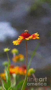 Omaste Witkowski - Buzzing Blissfully Methow Valley Flowers by Omashte