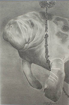 BW Manatee Playing with Crabtrap by Judith Pennington