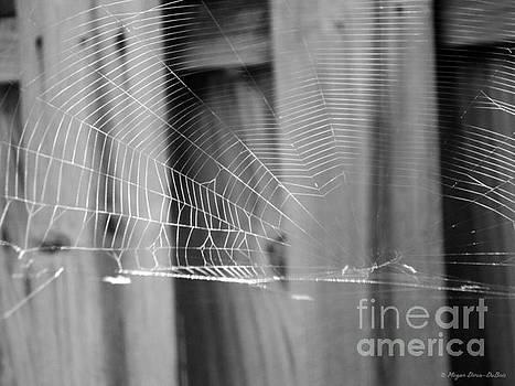 BW SpiderWeb by Megan Dirsa-DuBois