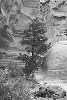 BW Tent Rock View by James Gay
