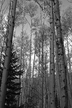 James Gay - BW View of Aspens