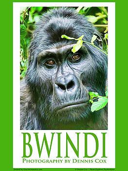 Dennis Cox Photo Explorer - Bwindi Travel Poster