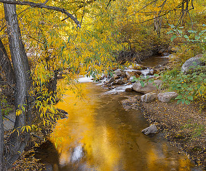 By the Shimmering Brook by Tim Reaves