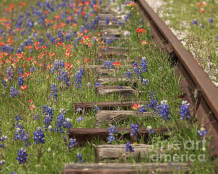 By the Tracks by Cathy Alba