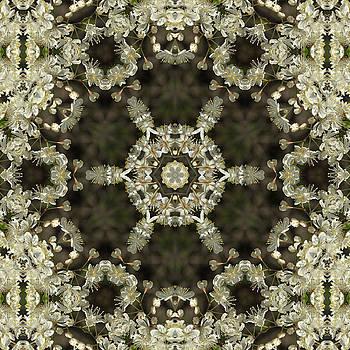 Valerie Kirkwood - Canada Plum Kaleidoscope