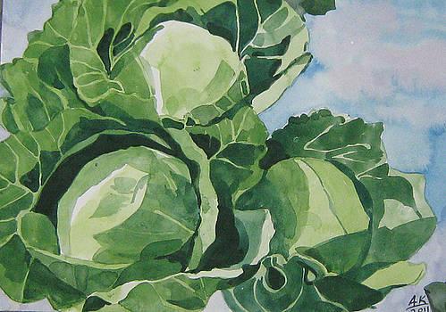 Cabbage by Akhilkrishna Jayanth