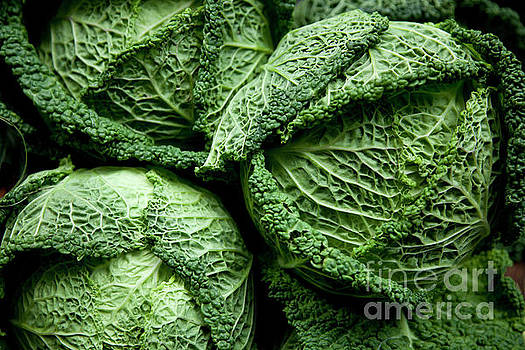Cabbage Brassica Oleracea by Gavin Thorn