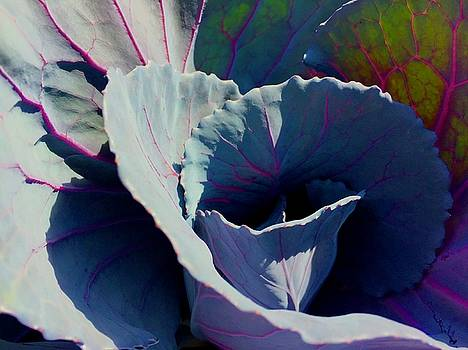 Cabbage in the Sun by Lexi Heft