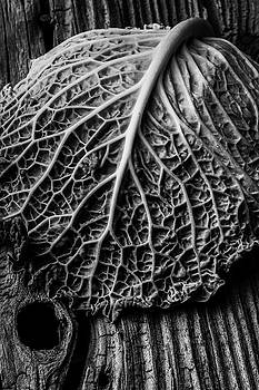 Cabbage Leaf On Old Board by Garry Gay