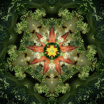 Cabbage n Carrots Mandala by Catherine Cirone