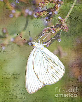 Cabbage White butterfly by TN Fairey
