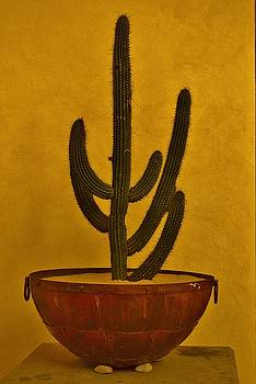 Cabo Cactus by Joy Bradley