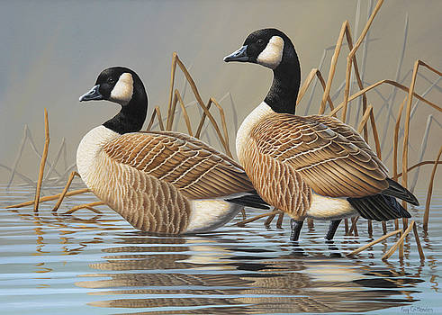 Cackling Canada Geese by Guy Crittenden