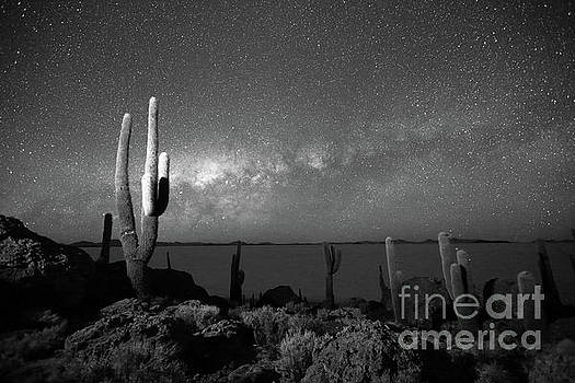 Cacti and Glowing Heavens in Black and White Incahuasi Island Bolivia by James Brunker