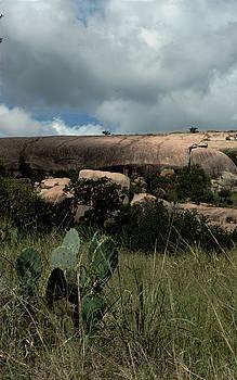 Karen Musick - Cacti and Granite
