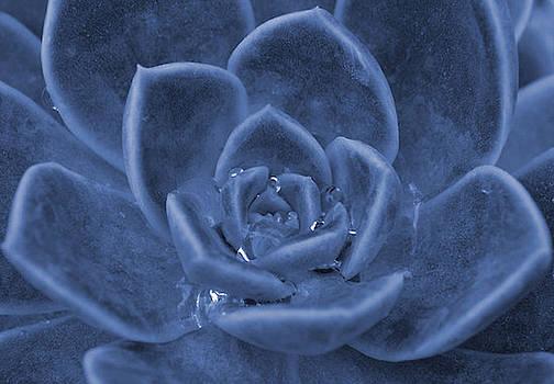 Cacti by Debbie Kelly