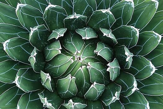Dallas Hyatt - Cacti Mundo