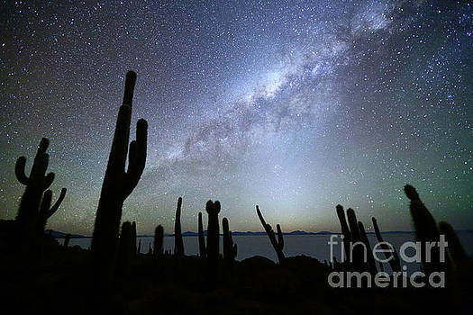 Cacti Silhouettes and Glowing Heavens Incahuasi Island Bolivia by James Brunker