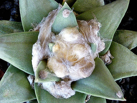 Cactus 3 by Selena Boron