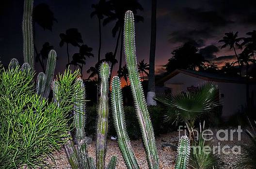 Cactus after Sunset by Elaine Manley